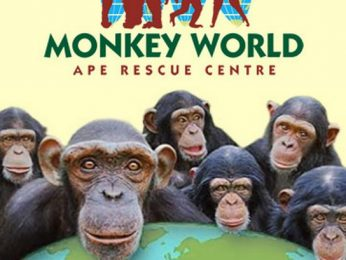 Monkey World